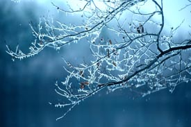 tree branch with ice - get ready for winter weather