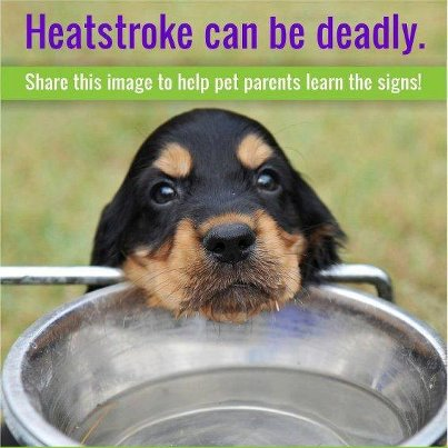 Dog with bowl of water; share this image to help pet parents know the signs of heatstroke