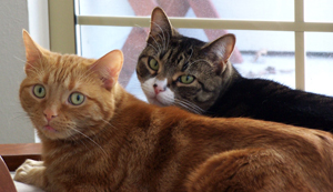Photo of two cats; make sure you have plans for your animals, too.