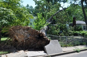 tree damage from derecho