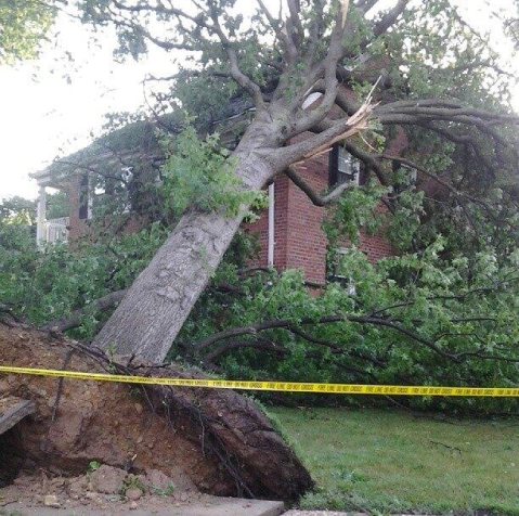 Storm Causes Downed Trees and Power Outages in Belle Haven/New Alexandria Overnight